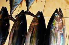 Fish Markets Royalty Free Stock Image