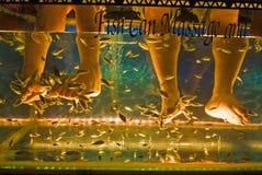 Fish massage aquarium. Two pairs of legs massaged by fish in aquarium Royalty Free Stock Photo