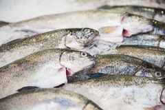Pile of fish on ice. Fish meat product on shelf in the store. Pile of fish on ice Stock Image