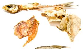 Fish meat, skin and skeleton closeup Royalty Free Stock Image