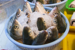The fish (Milkfish) head Stock Photos