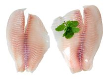 Fish and mint royalty free stock photography