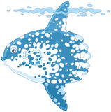 Fish-moon. Vector illustration of a large tropical sunfish, on a white background Royalty Free Stock Image