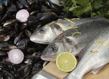 Fish and Mussels Stock Image