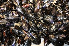 Fish Mussels in Catania royalty free stock photo