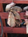 Fish must swimm Royalty Free Stock Photos