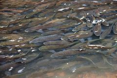 Fish in national park Royalty Free Stock Photos