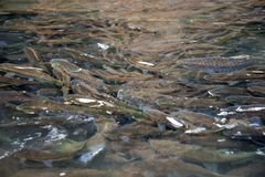 Fish in national park Stock Photo