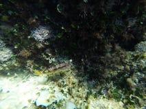 Fish near rock stock video footage
