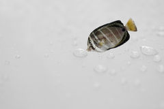Fish need water.Concept idea.Fish over drop rain gray background. Royalty Free Stock Image