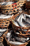 Fish nest Stock Photography