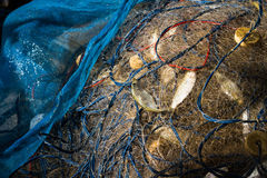 Fish in net Royalty Free Stock Photography