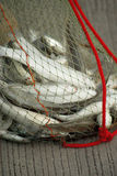 Fish in the net Stock Photo