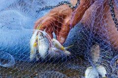 Fish in net ,Fishing net . Stock Photo