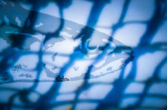 Fish in the net. Fish seen behind a shadow of a fishing net Stock Image