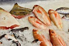 Fish of New Zealand Royalty Free Stock Photography