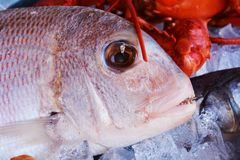 Fish next to shrimps in ice Stock Photos