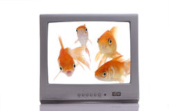 Fish-o-vision Stock Photography