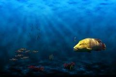 Fish in ocean Royalty Free Stock Images