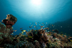 Fish and ocean. Taken in the Red Sea Stock Photos