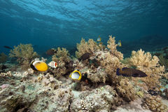 Fish and ocean. Taken in the Red Sea Stock Photography