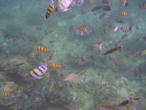 fish in the ocean stock images