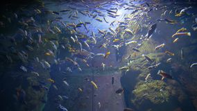 Fish oceanarium, different water animal species swimming in large aquarium stock footage