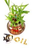 Fish oil pills Royalty Free Stock Photo