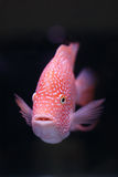 Fish On Black Background Stock Photo