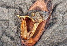 Fish with open jaws Stock Image