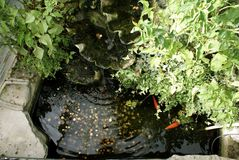 Fish. Ornamental fish pond. Fish pond with coins Stock Photos