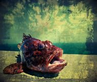 Fish out of water. Red fish over bluegreen background. Croatia Royalty Free Stock Photos