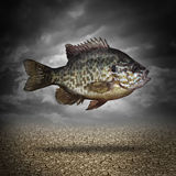 Fish Out Of Water. As a business or lifestyle metaphor for adapting to changes in the environment as an aquatic animal floating above dried cracked ground as a Royalty Free Stock Photography