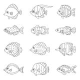 Fish outline vector icon set tropical, marine, oceanic. Royalty Free Stock Photography