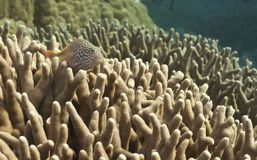 Fish over Coral reef, australia Stock Images