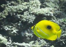 Fish over Coral reef, australia Stock Photos