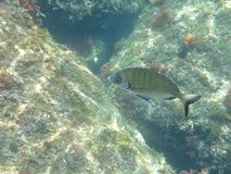 Fish over Rocks Stock Photos