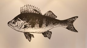 Fish painting on the wall stock images