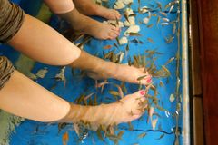 Fish pedicure. Feet polished nails blue water Royalty Free Stock Images