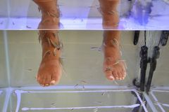 Fish pedicure spa Stock Photography