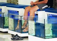 Fish pedicures. Royalty Free Stock Photos