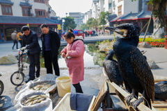 Fish pedlar and cormorants in street of sunny winter,China. Royalty Free Stock Photo