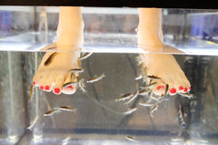 Fish peeling Stock Photography