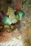 fish perching Στοκ εικόνα με δικαίωμα ελεύθερης χρήσης