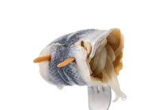 Fish Pickled Herring Close-Up Stock Photo