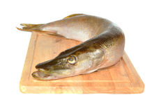 Fish a pike  on a board Stock Images