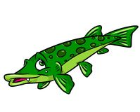 Fish pike cartoon illustration Stock Image