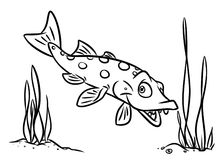 Fish pike coloring pages Royalty Free Stock Photography