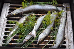 Fish pike smoke smokehouse tradition recipes Royalty Free Stock Photo