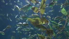 Fish and plant life. Fish and marine life underwater stock video